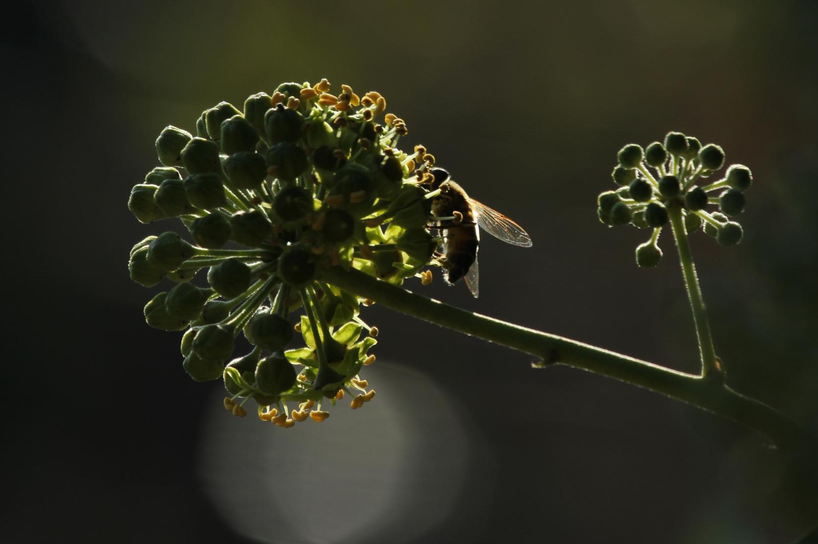 Schlaraffenland für Insekten