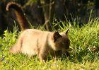 Schleich-Katze