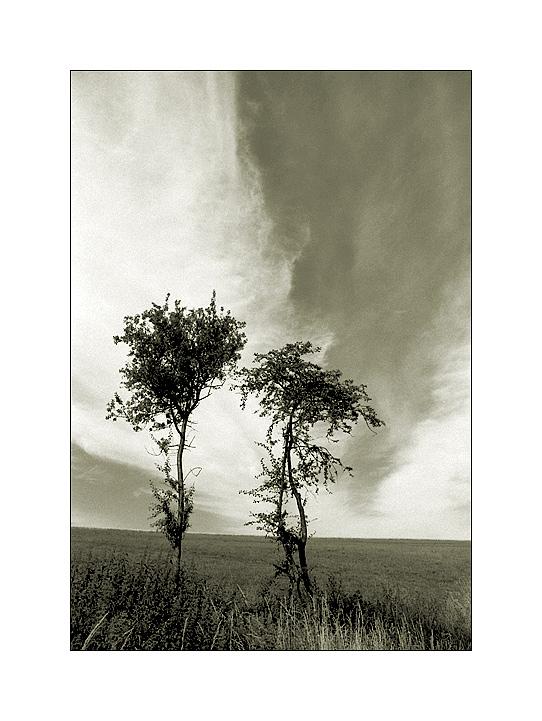 Schleierwolken