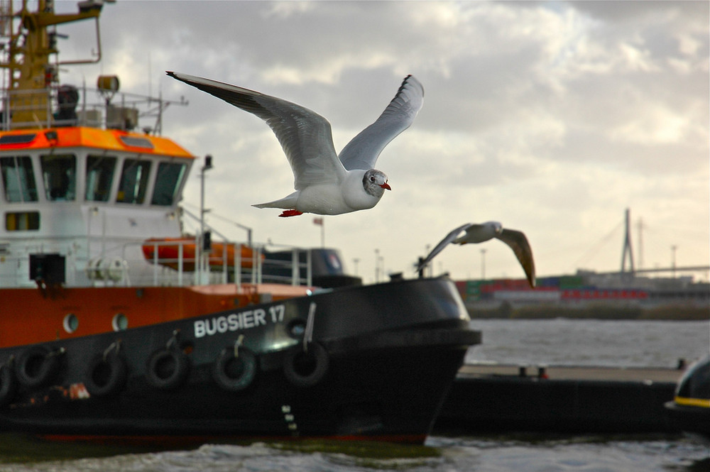 Schlepperhafen in Hamburg