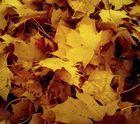 schlichter Herbst.