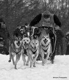 Schlittenhunde Adventure Clausthal-Zellerfeld 2013