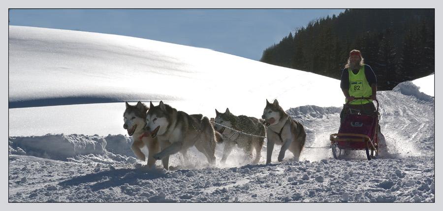 Schlittenhunderennen 010204