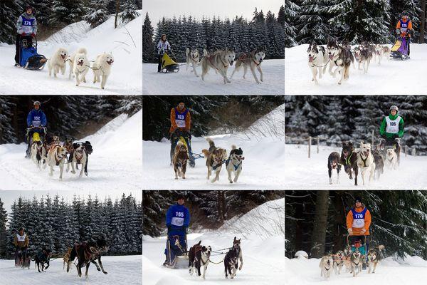 Schlittenhunderennen 02