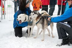 Schlittenhunderennen #2