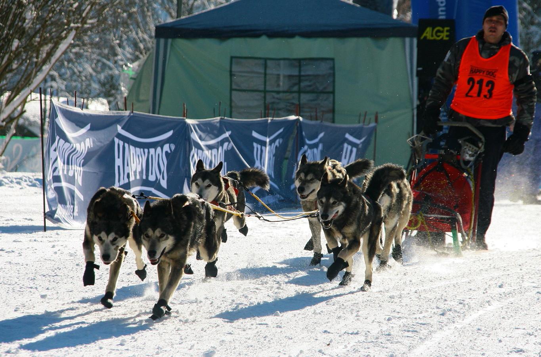 Schlittenhunderennen 2