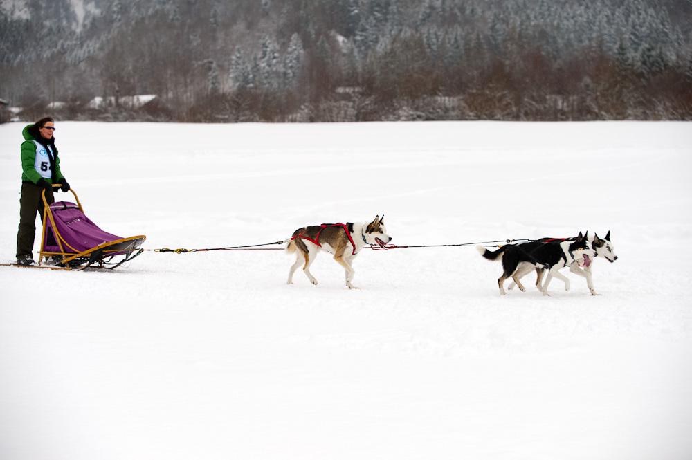 Schlittenhunderennen #6