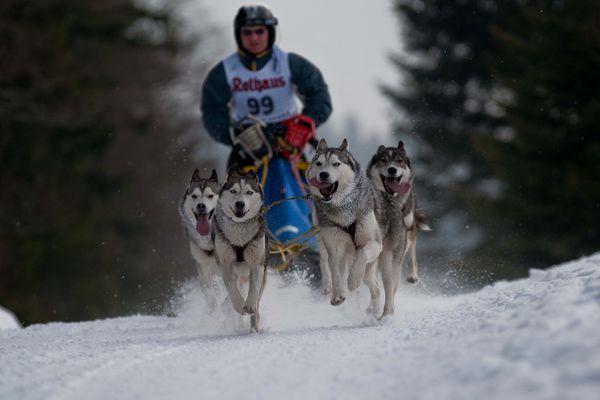 Schlittenhunderennen in Bernau 6