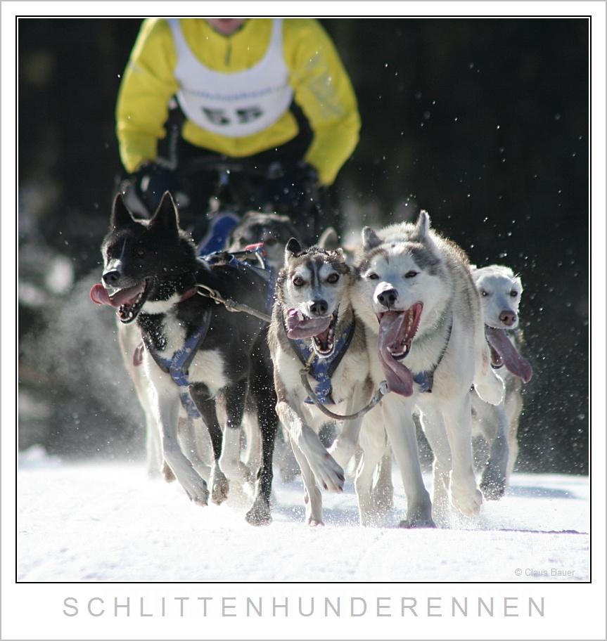 Schlittenhunderennen in Haidmühle Bayerischer Wald