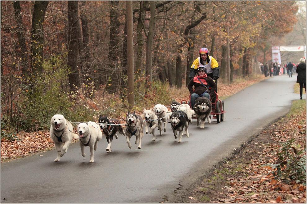 Schlittenhunderennen in Spremberg 2
