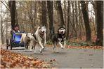 Schlittenhunderennen in Spremberg 3