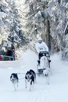 Schlittenhunderennen mit Alex Serdjukov