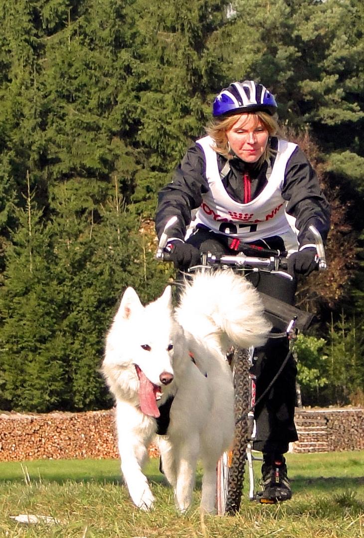 Schlittenhunderennen Reingers (2011) Part 6