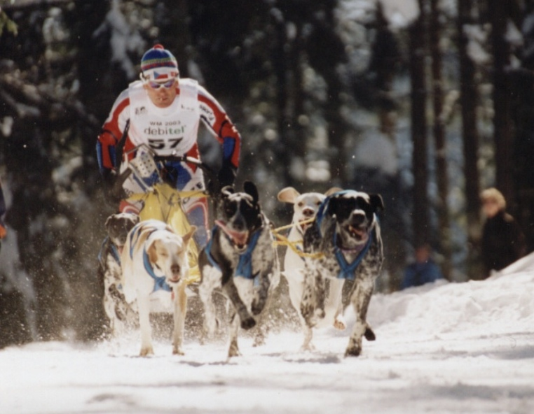 Schlittenrennen