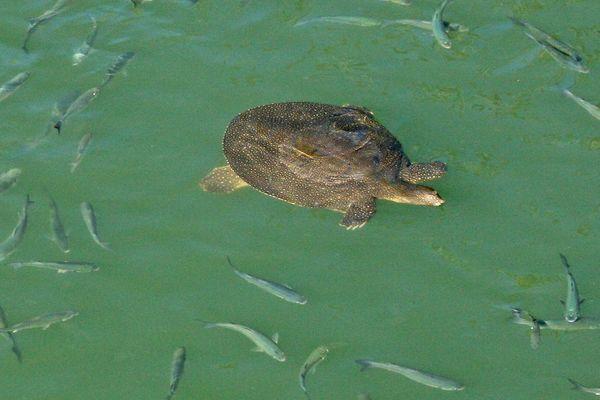 Schlldkröte und Fische 2