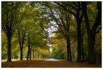Schloss-Allee im Herbst