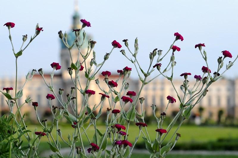 Schloss Charlottenburg mit Parkansicht