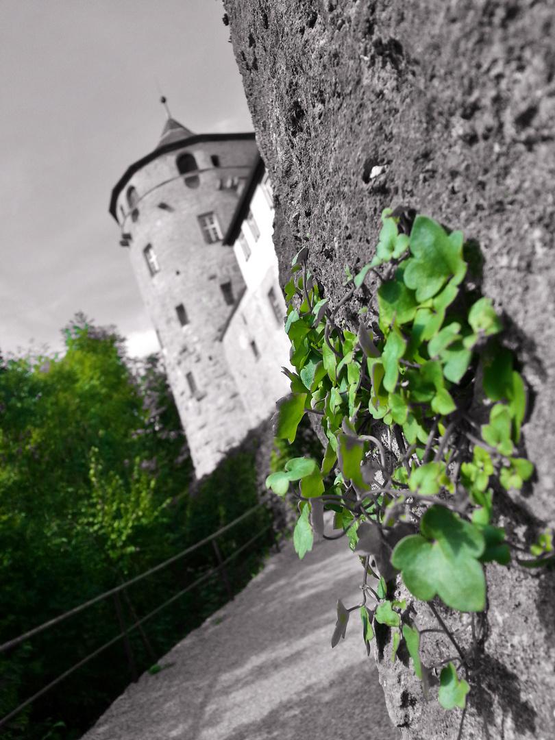 Schloss Langenburg