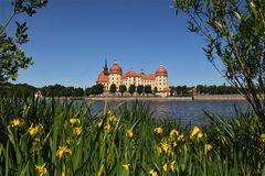 Schloss Moritzburg mit Wasserlilien