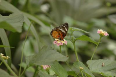 Schloss Sayn Schmetterling