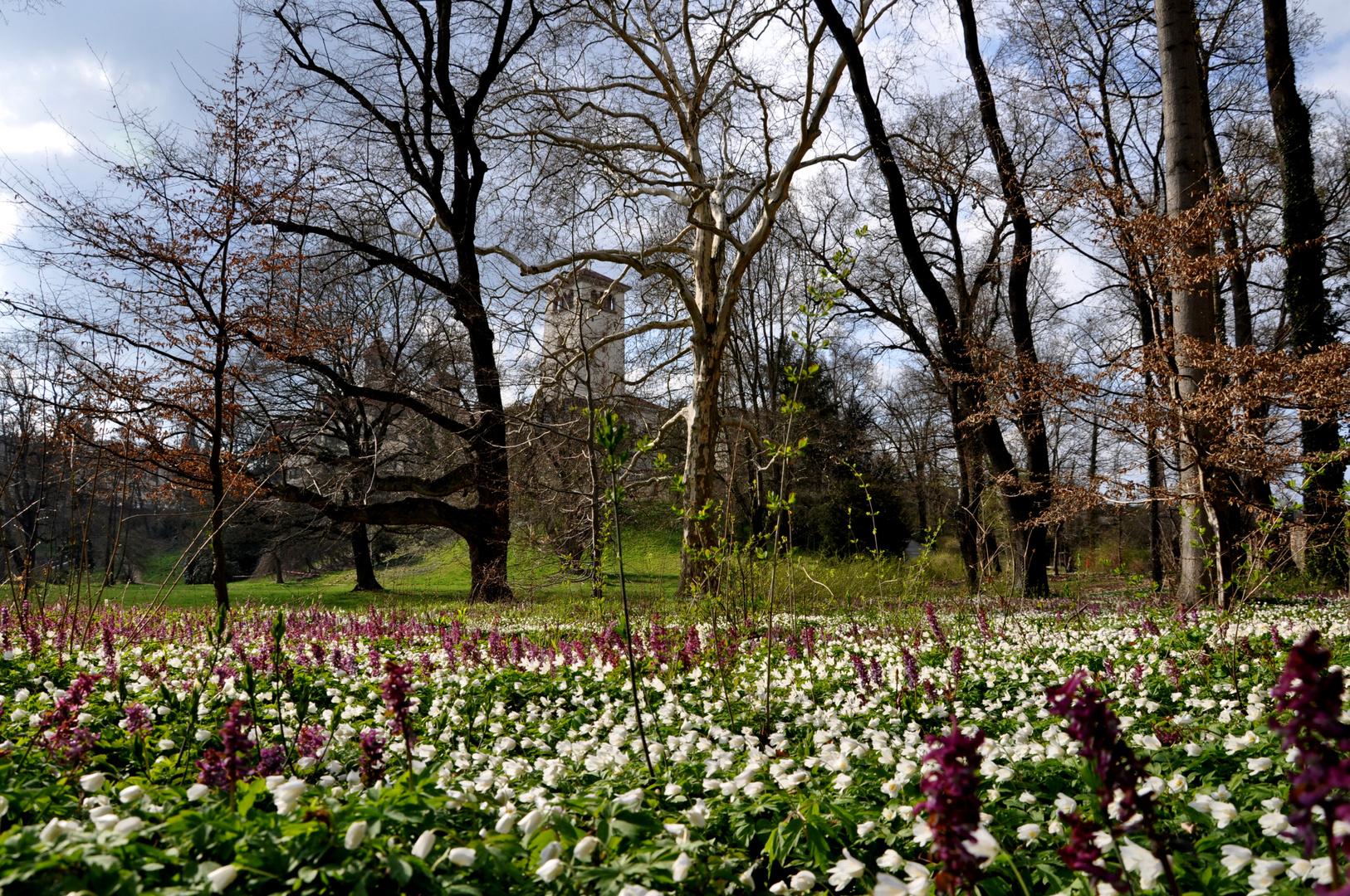 Schloss Waldenburg im Frühling~~~~Nr.: 6