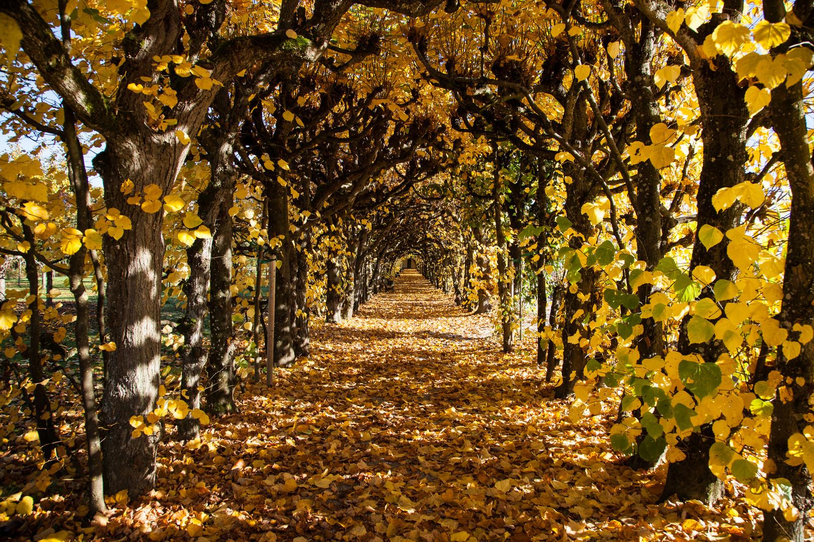 Schlossgarten Dachau