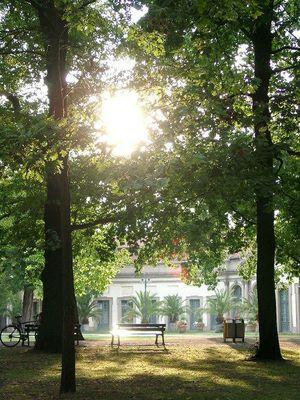 Schlossgarten Erlangen im August am Abend