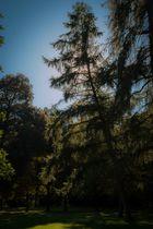 Schloßgarten Karlsruhe - Baum im Licht
