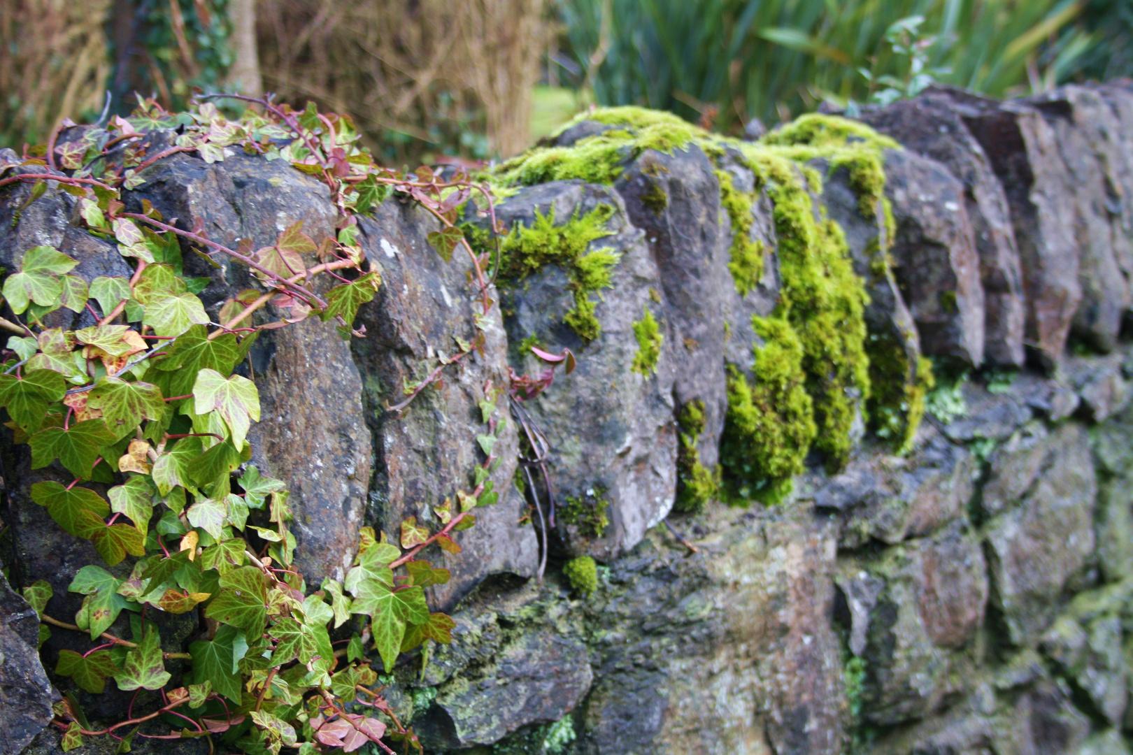 Schlossgarten Malahide Dublin