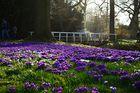 Schlossgarten Oldenburg