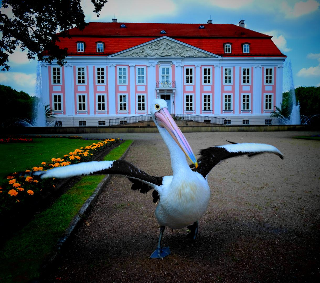 Schlossgarten Pelikan