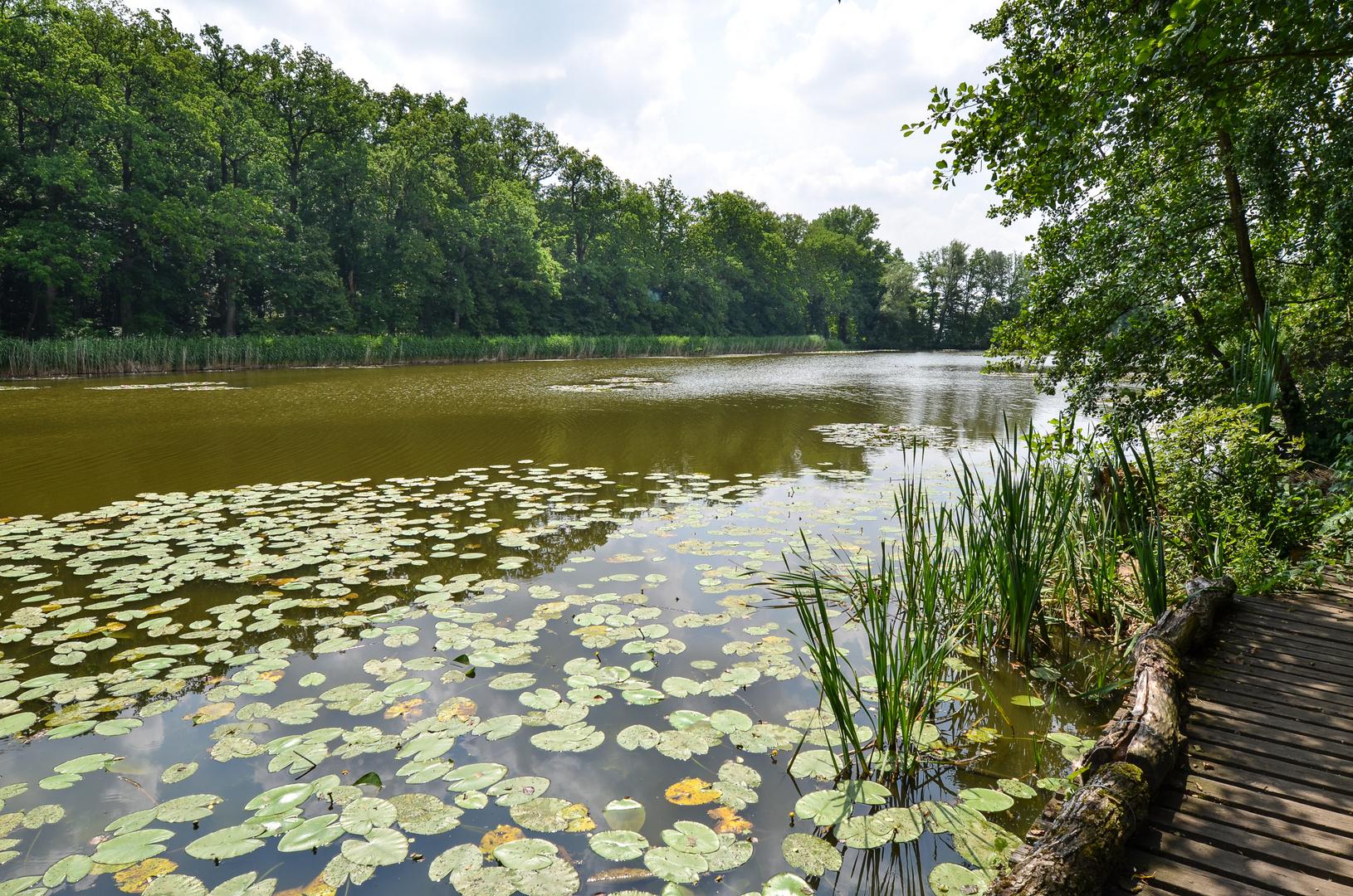 Schlosspark Dennenlohe - Nr. 8