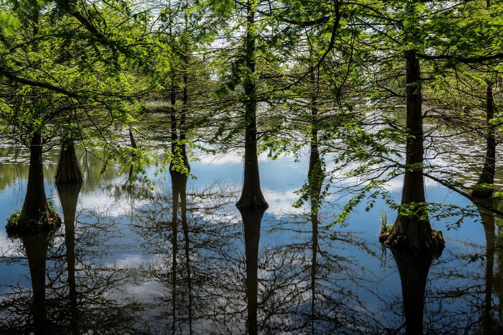 Schlosspark Dennenlohe - Upside Down ?