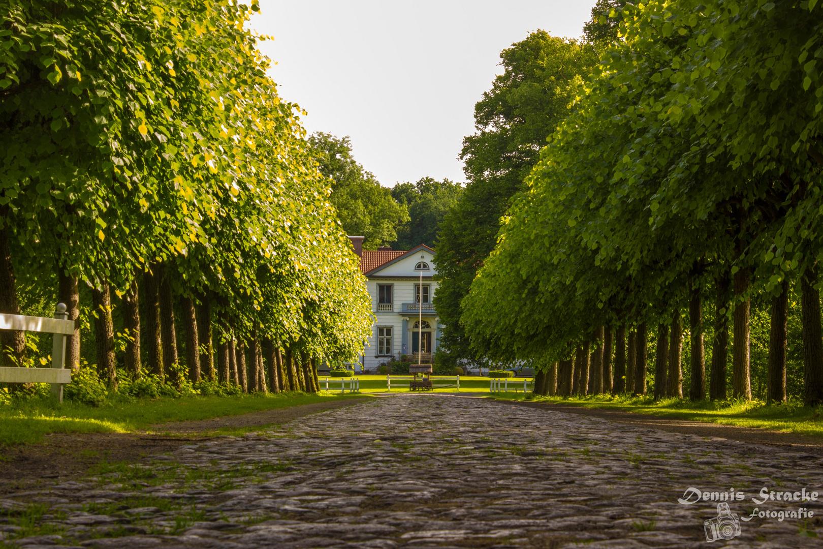 Schlosspark Haseldorf