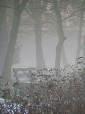 Schloßpark Lauchhammer - Nebel