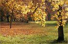 Schlosspark Wiesbaden-Biebrich