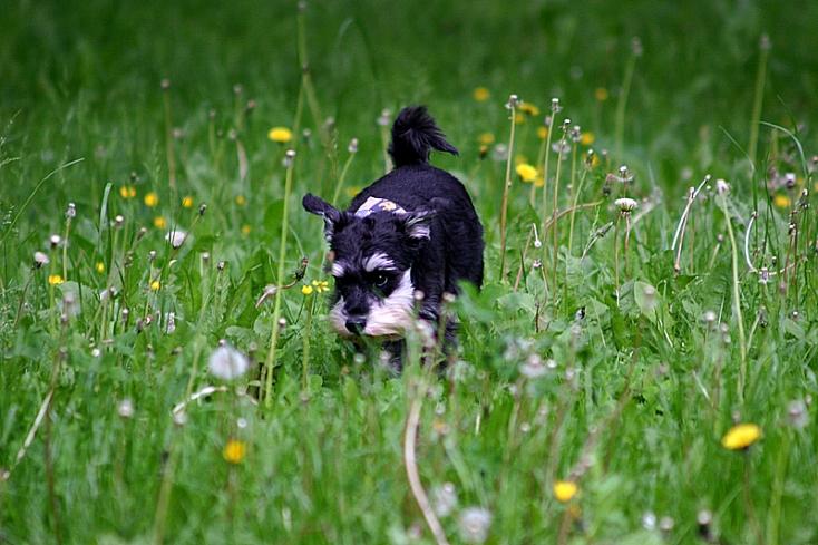 Schlossteich - Chemnitz - Hund geht spazieren