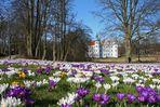 Schlosswiese im Frühling