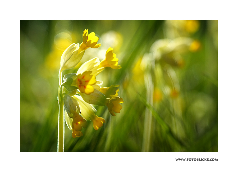Schlüssel Blumen Licht