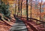 Schmale Straße durch einen weiten Herbst