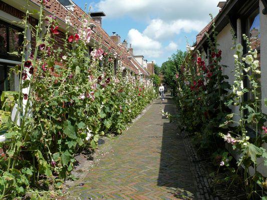 Schmalle strasse mit Blumen in Garnwerd