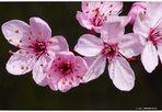 Schmeichelei der Frühlings-Farben