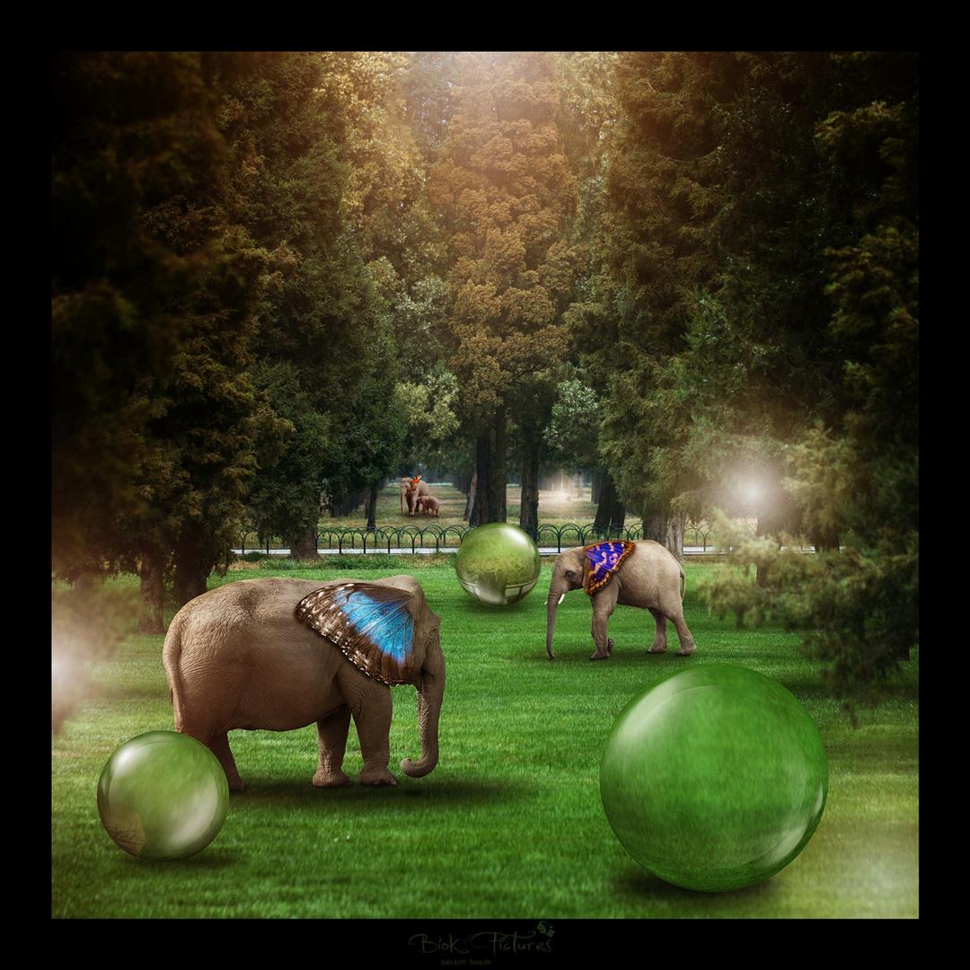 Schmetterfanten-Land