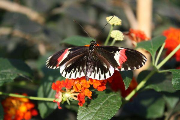 Schmettergagge