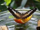 Schmetterlin Teil 3