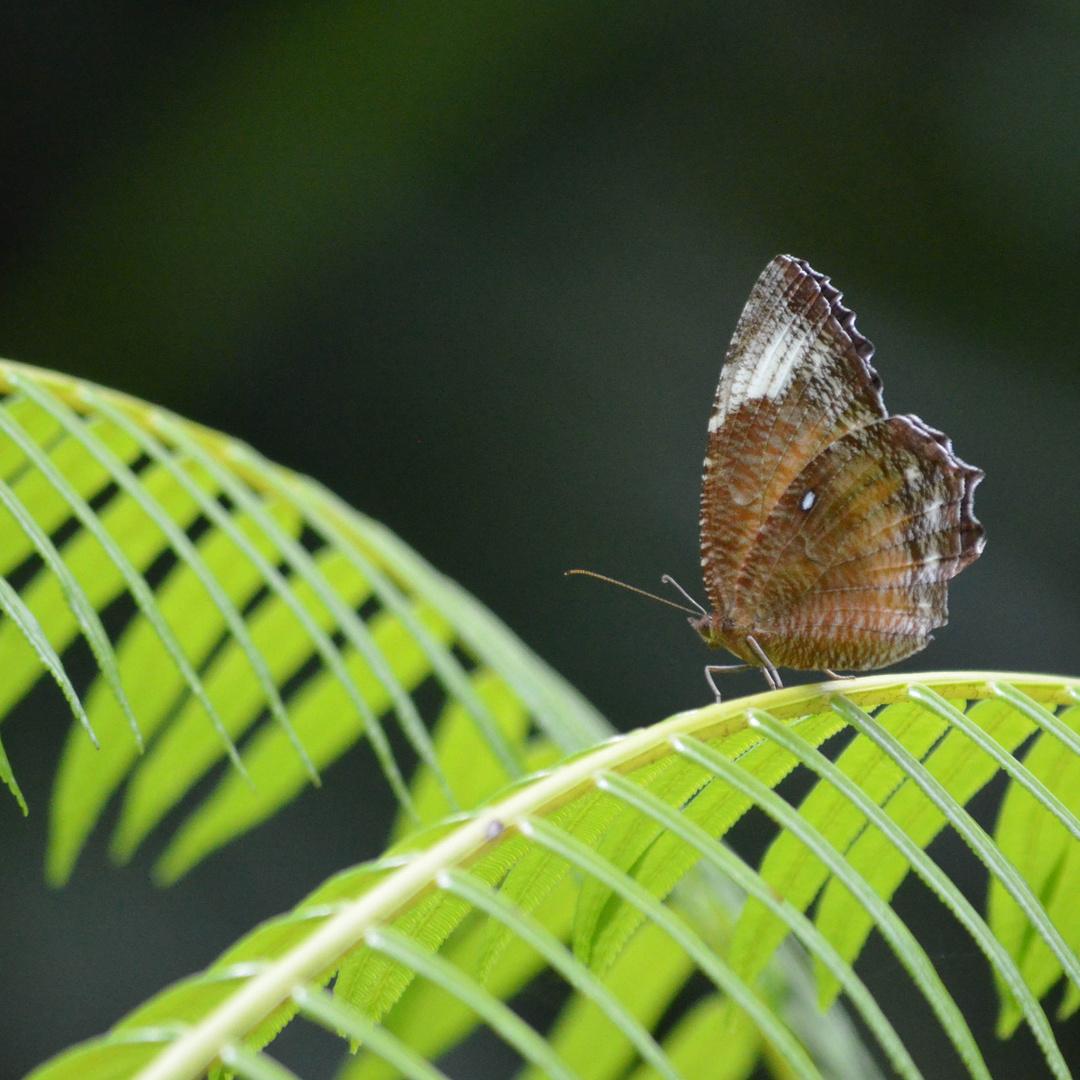 Schmetterling (1)