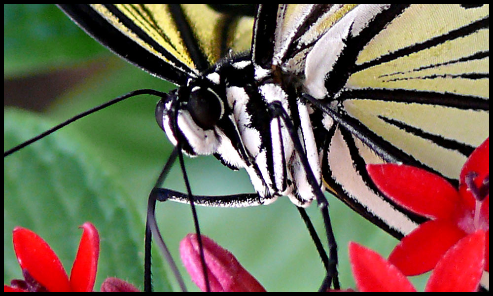 Schmetterling 100 Prozent