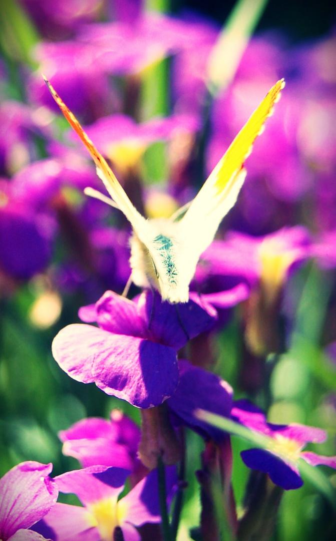 Schmetterling 2.