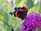 Schmetterling ...2...