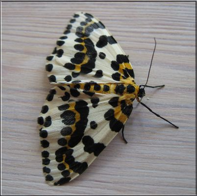 Schmetterling...